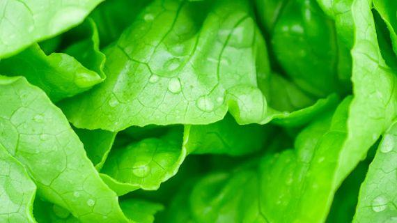 Grocery primary banner of green lettuce.jpg